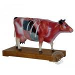 Model kravy s akupunktúrnymi bodmi (-7011-3