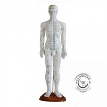 Akupunktúrny model muža 60 cm NOVINKA