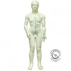 Model Ľudského tela s akupunktúrnymi bodmi: muž 70 cm (M-7004)