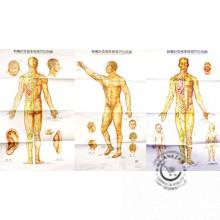 Sada plagátov- Akupunktúrne plagáty 3 kusy
