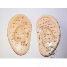 Akupunktúrny model ucha v životnej veľkosti 7,5 cm - sada pravé a ľavé